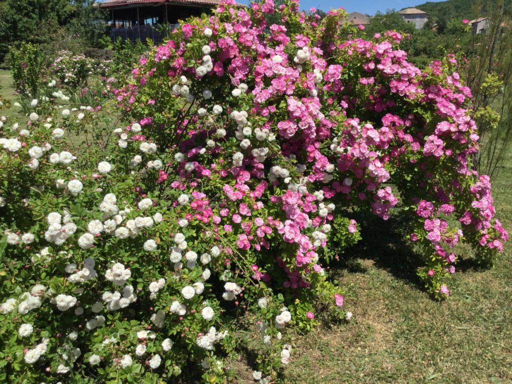 La Roseraie des Pommiers en Ardèche 2e0a8510