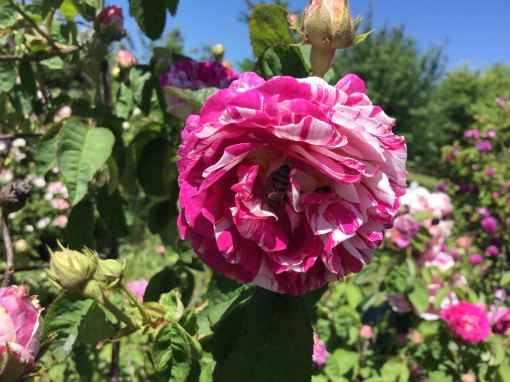 La Roseraie des Pommiers en Ardèche 30590410