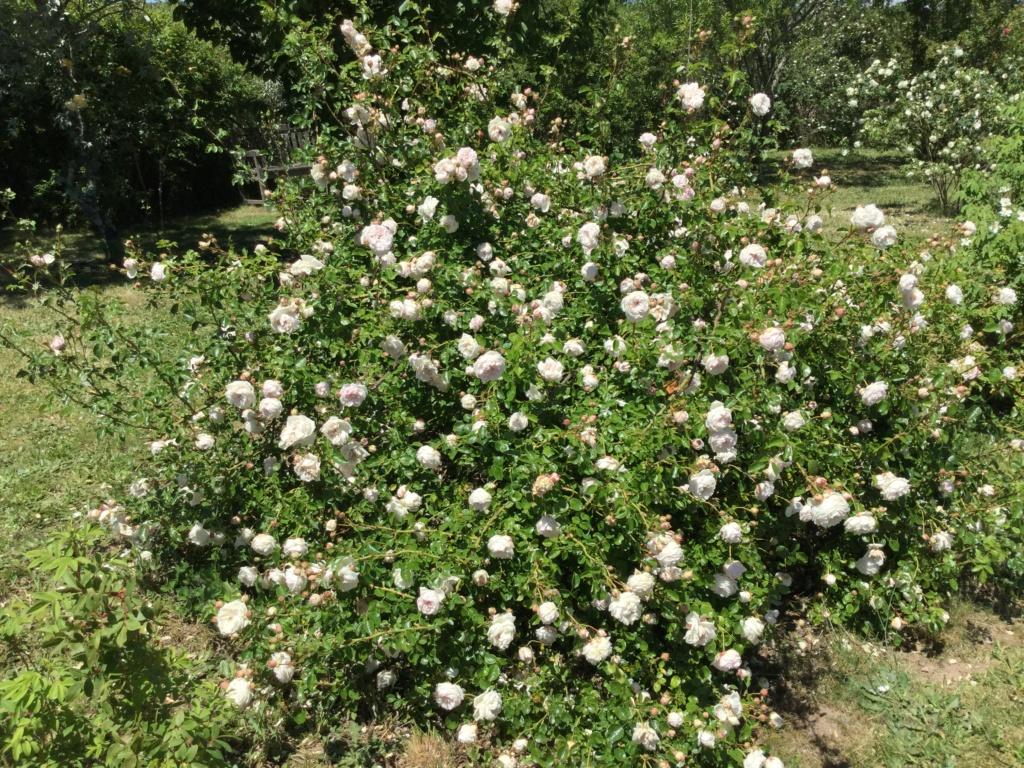 La Roseraie des Pommiers en Ardèche 3ca47010