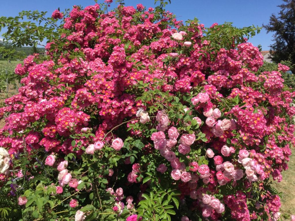 La Roseraie des Pommiers en Ardèche 7d5cdc10