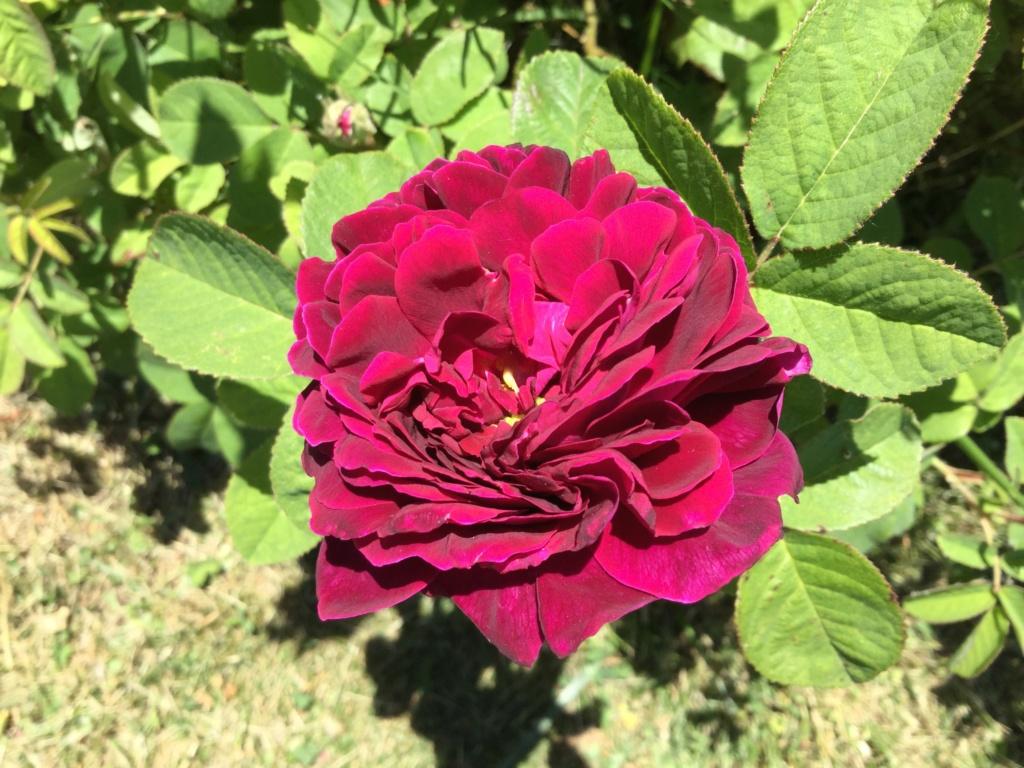 La Roseraie des Pommiers en Ardèche 85523310