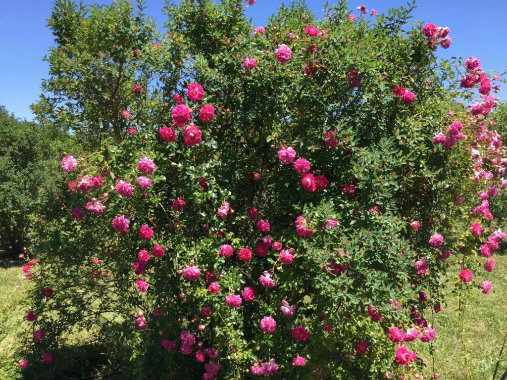 La Roseraie des Pommiers en Ardèche 8c48cd10