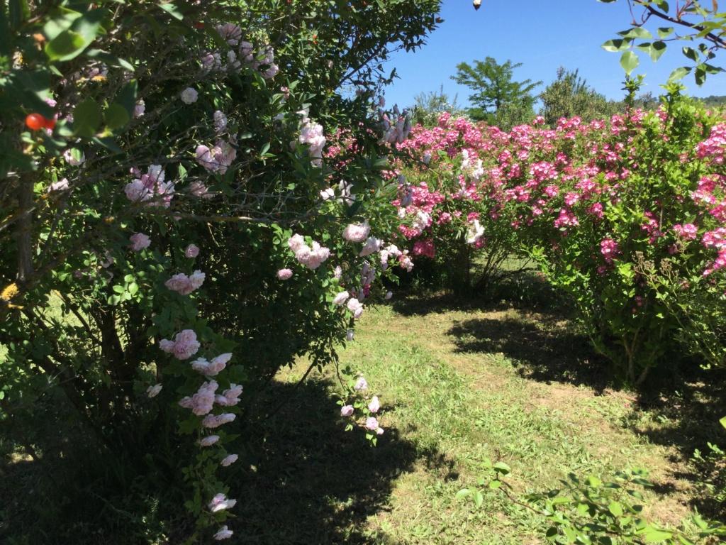 La Roseraie des Pommiers en Ardèche 97db1510