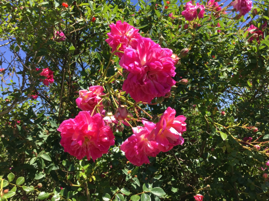 La Roseraie des Pommiers en Ardèche E7b0a310