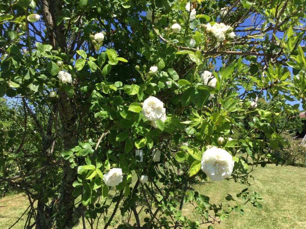 La Roseraie des Pommiers en Ardèche F57b0e10