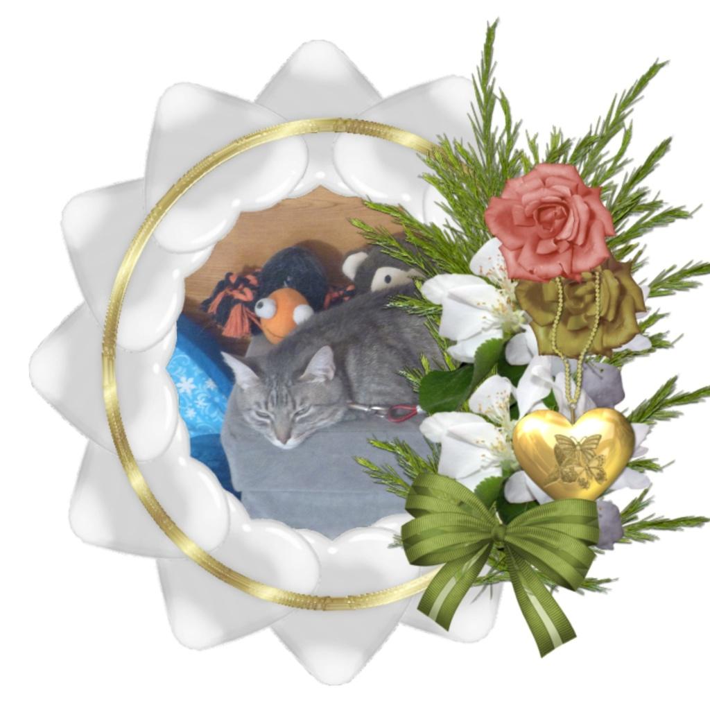 Montage de ma famille - Page 7 Photos43