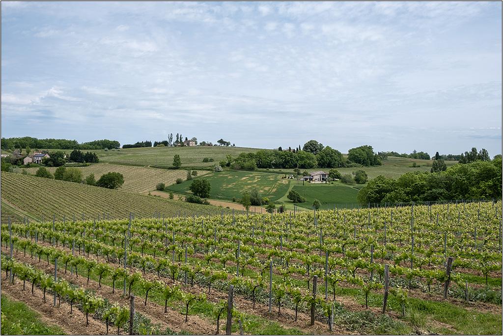 [Paysages] Les vignes + ajout Dscf2117