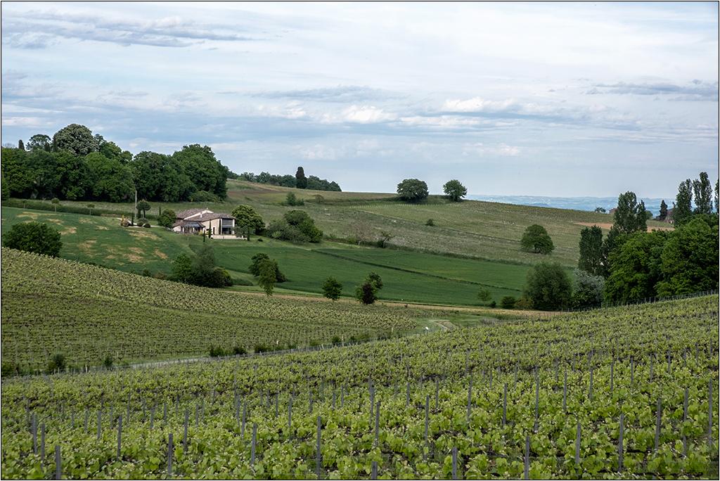[Paysages] Les vignes + ajout Dscf2118
