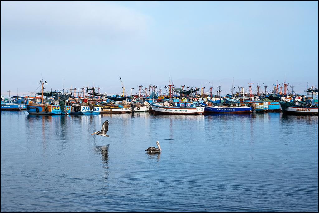 [Paysages] En bateau vers Paracas Dscf2812