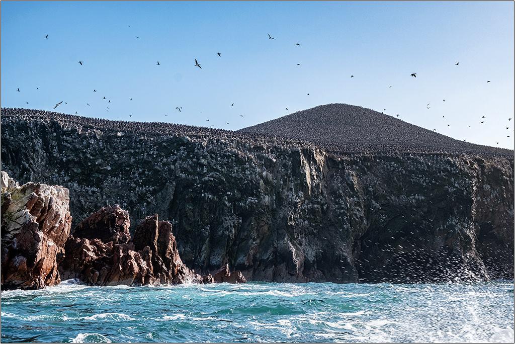 [Paysages] En bateau vers Paracas Dscf2915