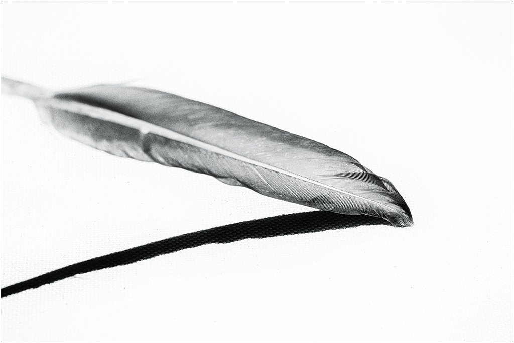 [Noir et Blanc] La plume + V2  Img_1911