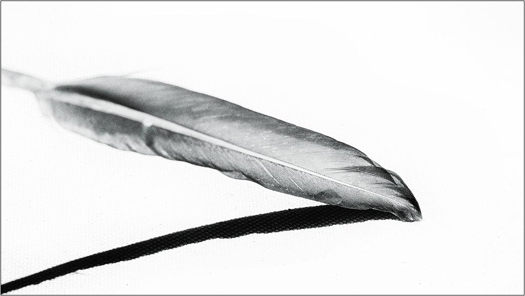 [Noir et Blanc] La plume + V2  Img_1917