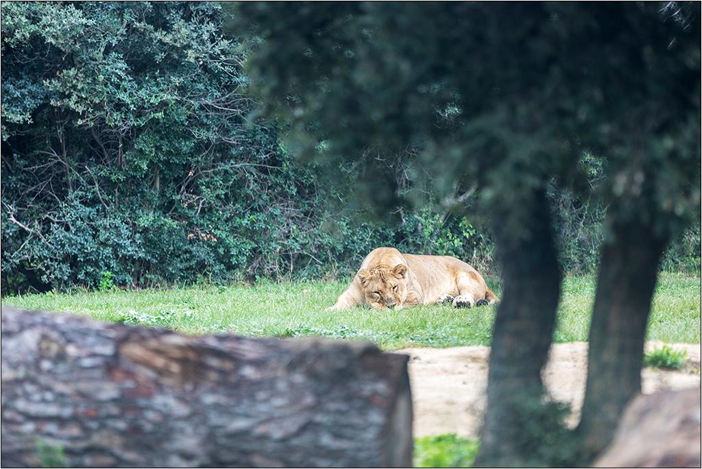 [Animaux] Aux zoo de la Barben la série Img_2210