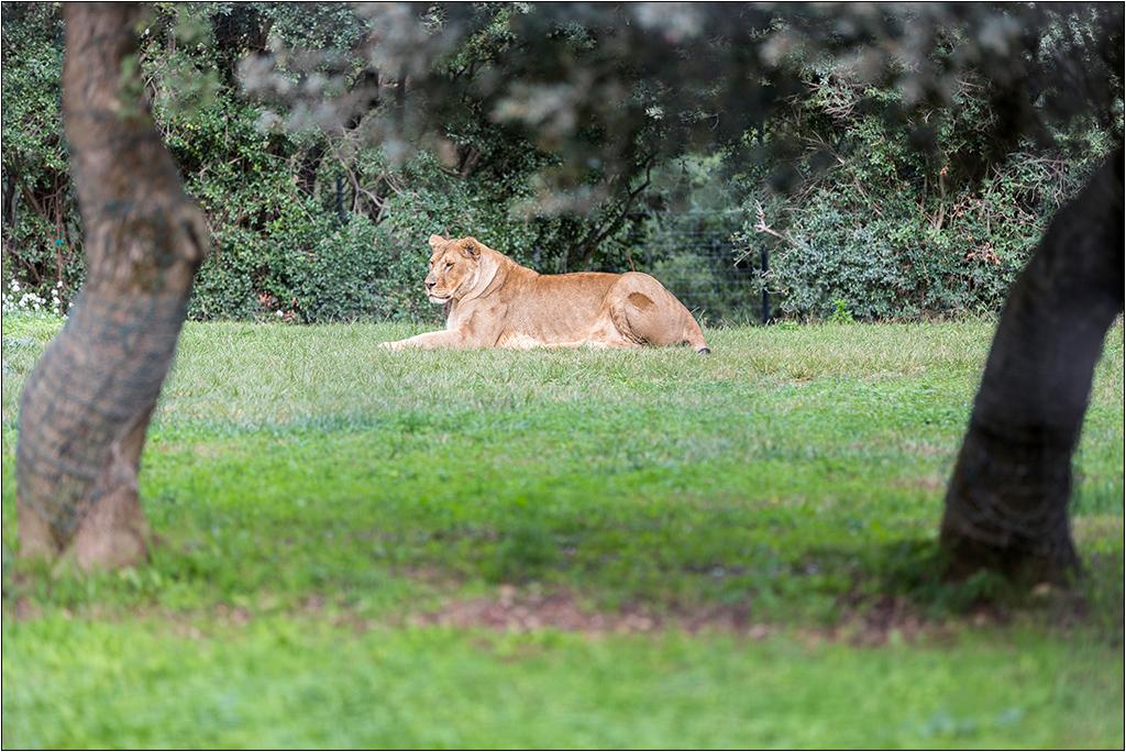 [Animaux] Aux zoo de la Barben la série Img_2211