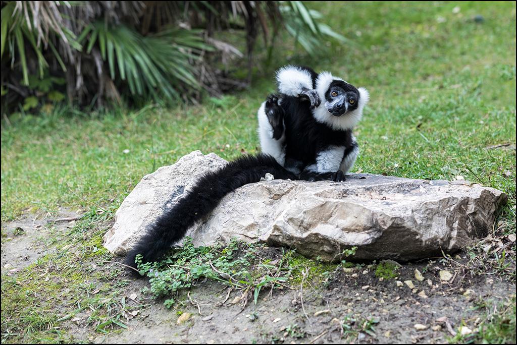 [Animaux] Aux zoo de la Barben la série Img_2213