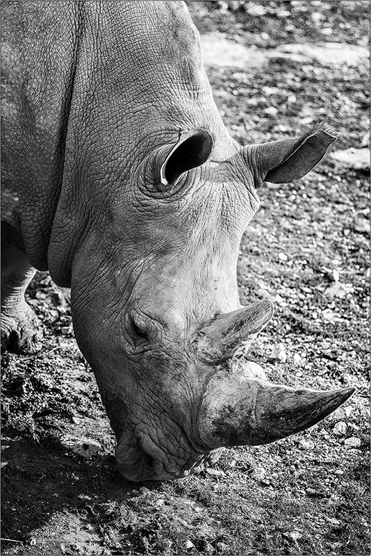 [Animaux] Aux zoo de la Barben la série Img_2215