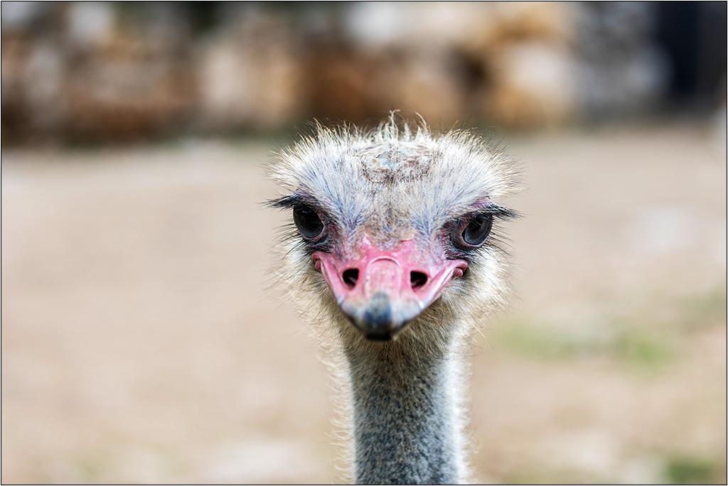 [Animaux] Aux zoo de la Barben la série Img_2218