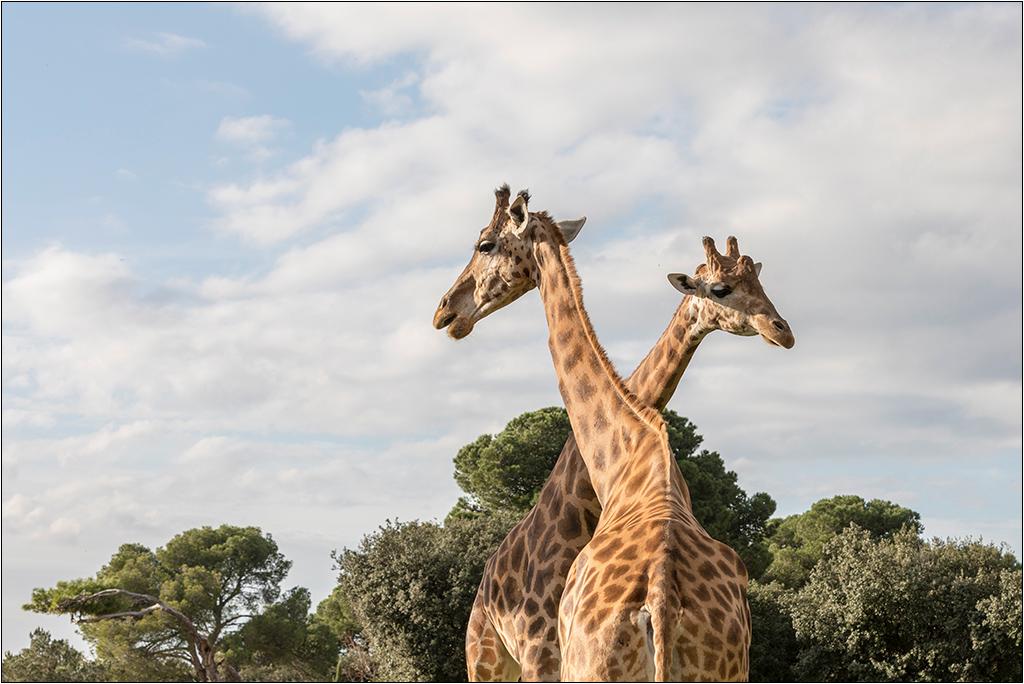 [Animaux] Aux zoo de la Barben la série Img_2311
