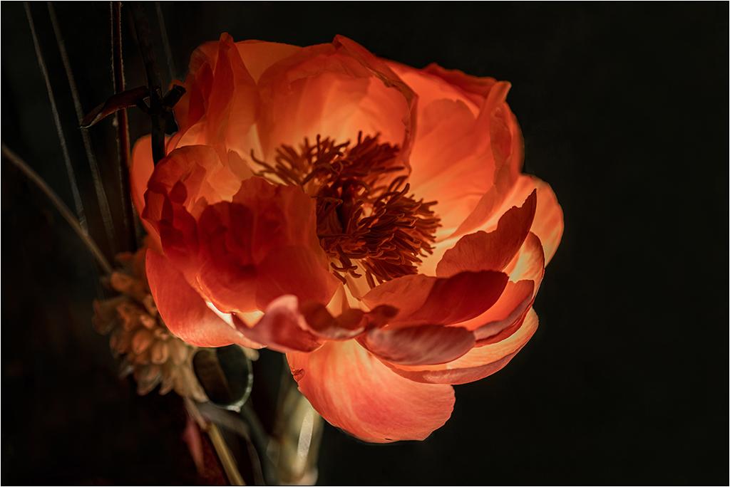 [Macro et Proxy] Aux floralies de Sanary Img_3410