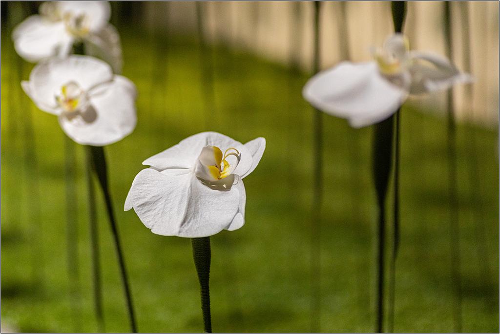 [Macro et Proxy] Aux floralies de Sanary Img_3412