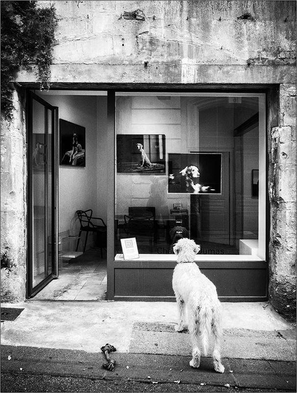 [Rue et Instants de vie] Le chien Pa193210
