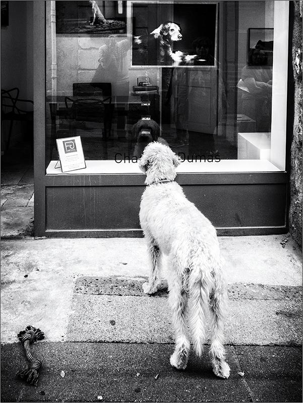 [Rue et Instants de vie] Le chien Pa193211