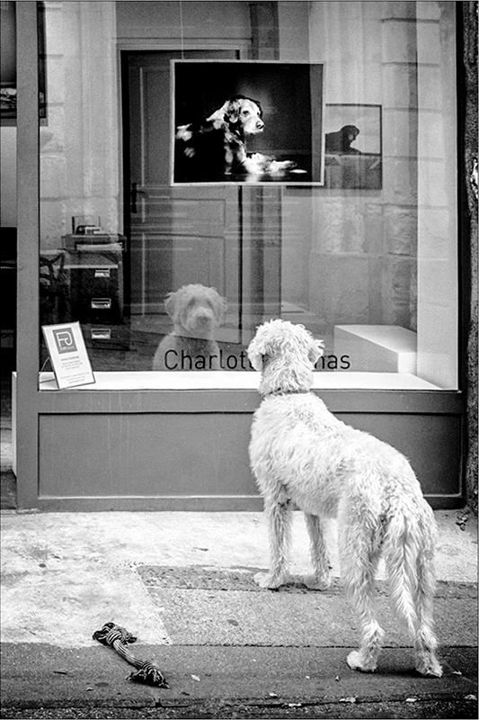 [Rue et Instants de vie] Le chien Pa193213