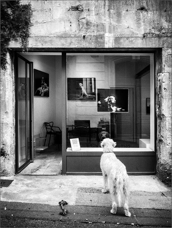 [Rue et Instants de vie] Le chien Pa193214