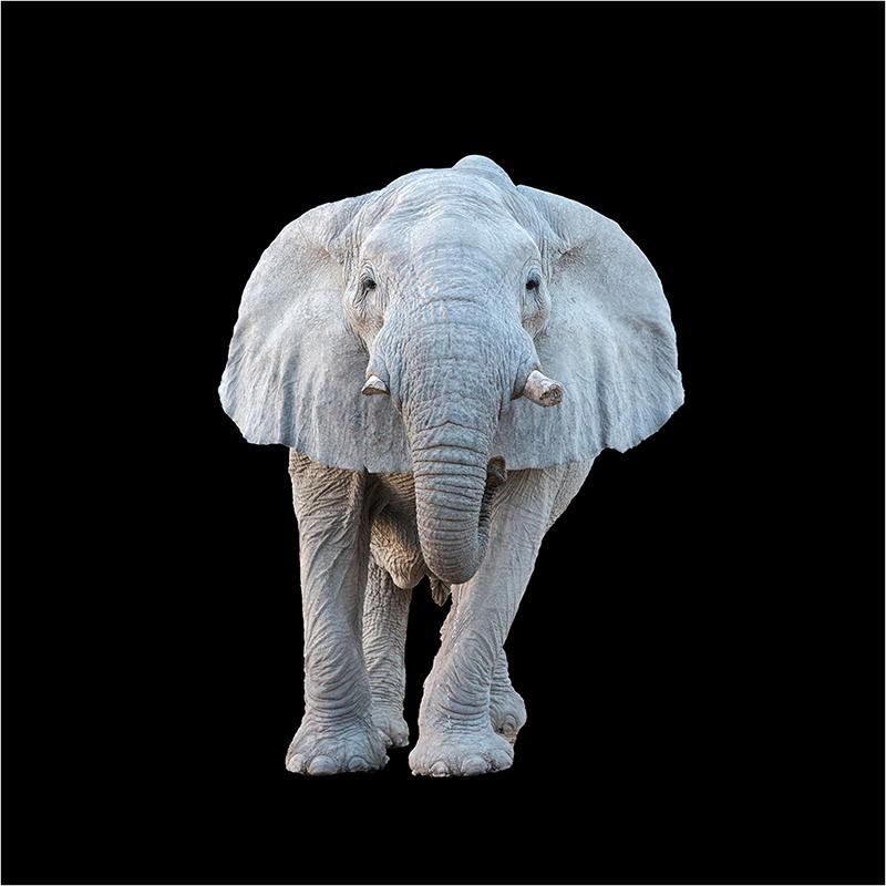 [Animaux] L'éléphant Sans_t24