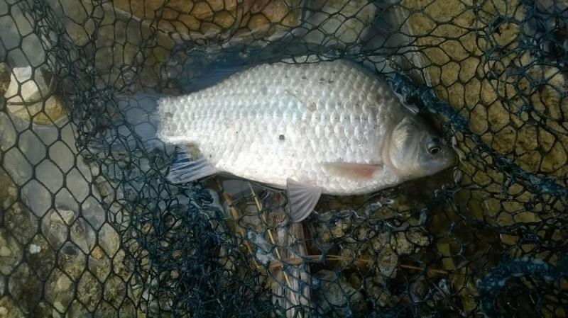 Pêche en étang  Wp_20117