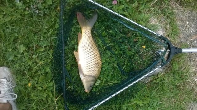 Pêche en étang  Wp_20121