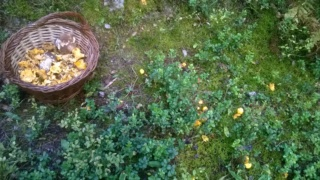 Aprés midi Champipi Wp_20126
