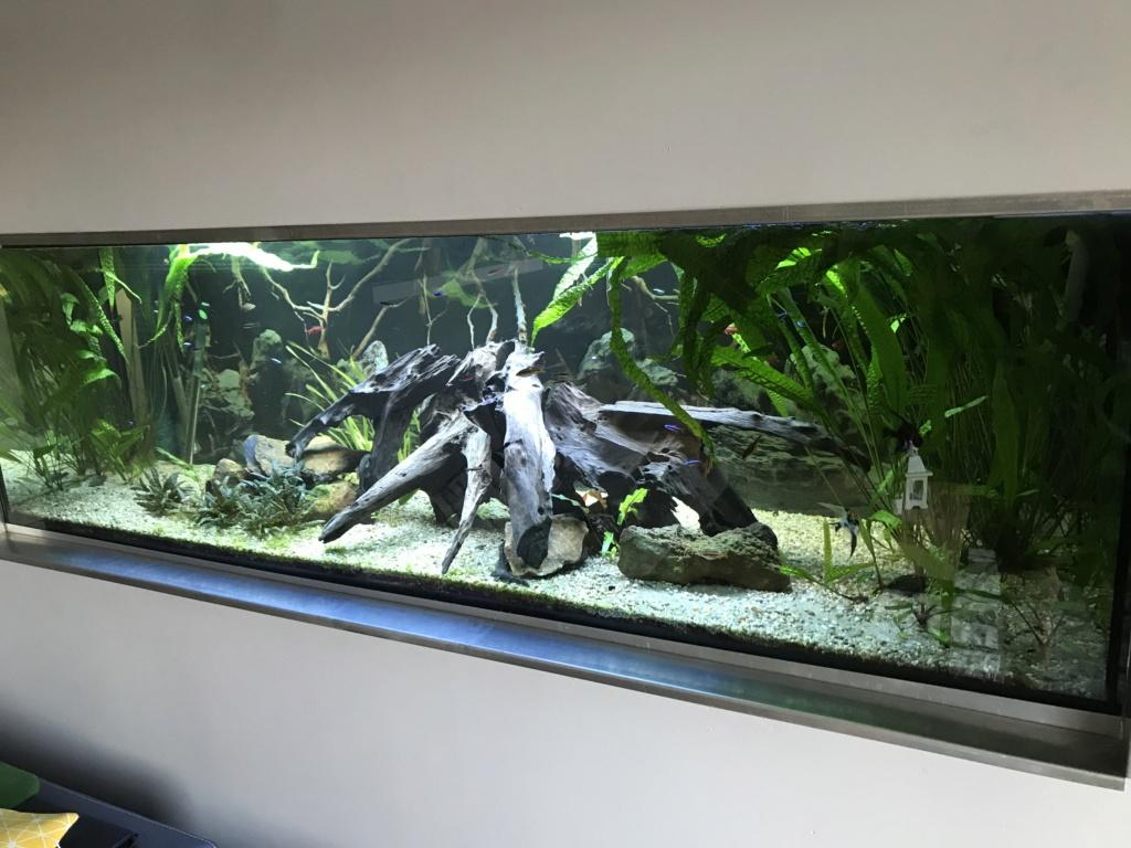 Mes aquariums  - Page 2 14634910