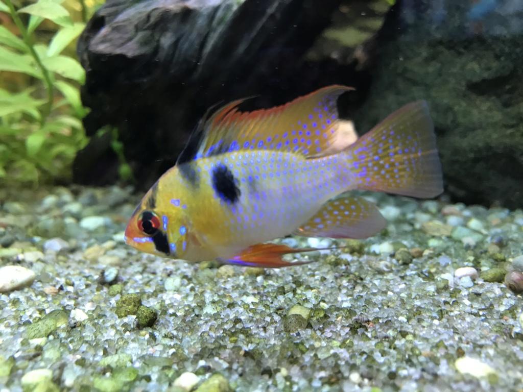 Mes aquariums  1de9e110
