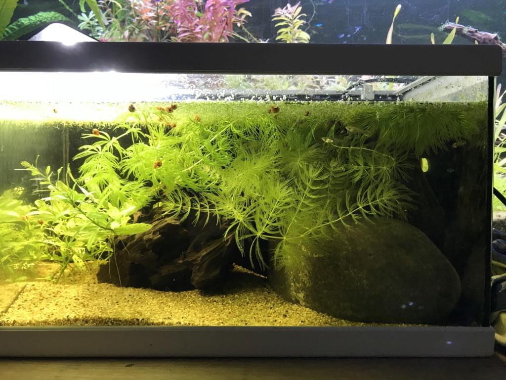 Mes aquariums  24164510