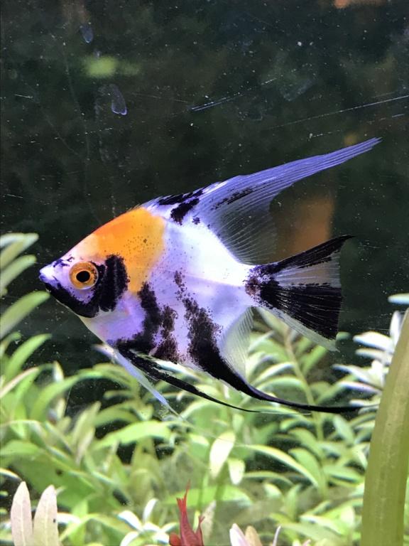 Mes aquariums  40e90410