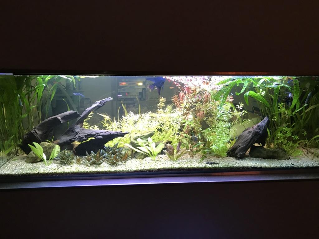 Mes aquariums  93705a10