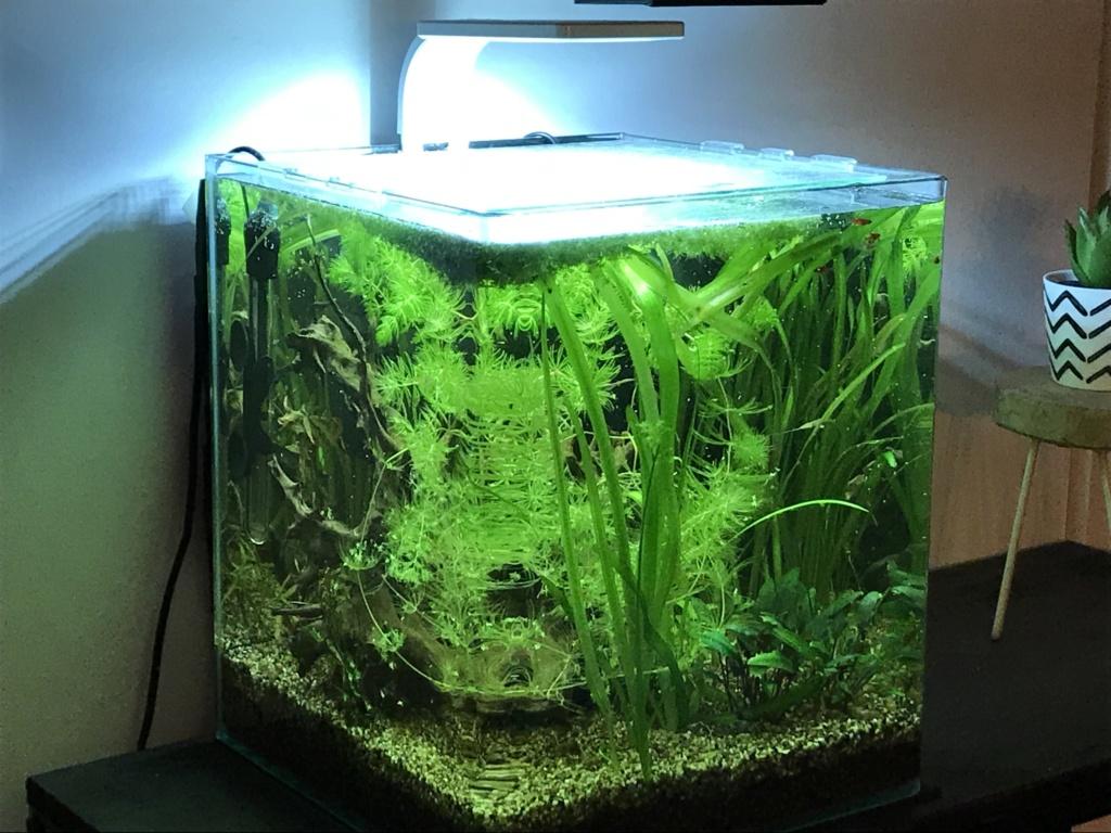 Mes aquariums  - Page 2 94951410