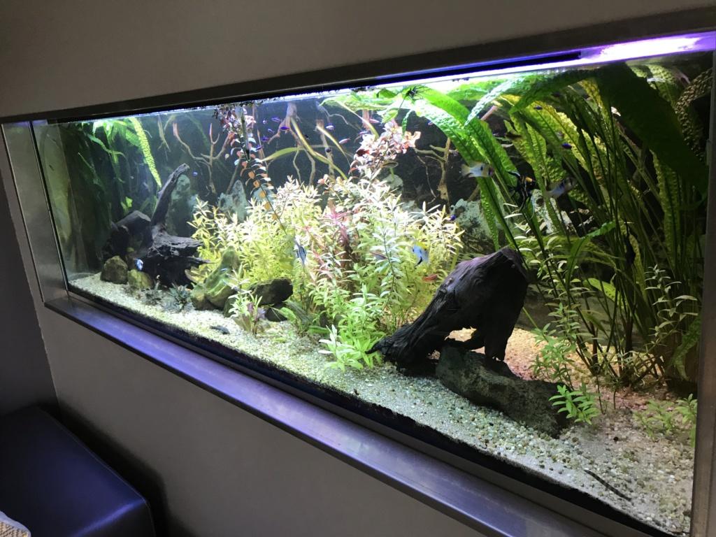Mes aquariums  - Page 2 A035bf10