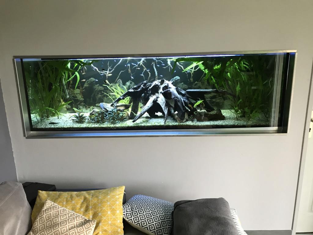 Mes aquariums  - Page 2 A1174c10