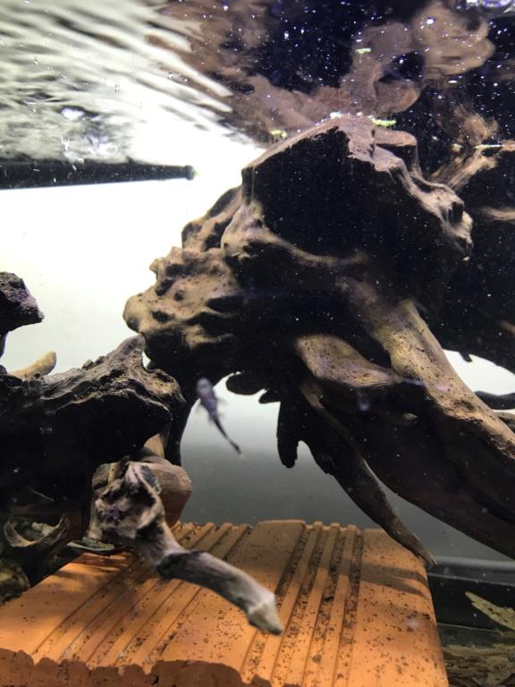 Mes aquariums  - Page 2 Ec498e10
