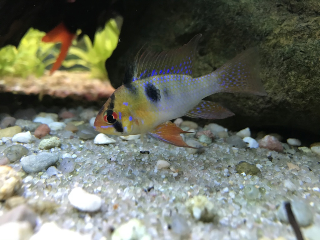 Mes aquariums  - Page 2 F2649210