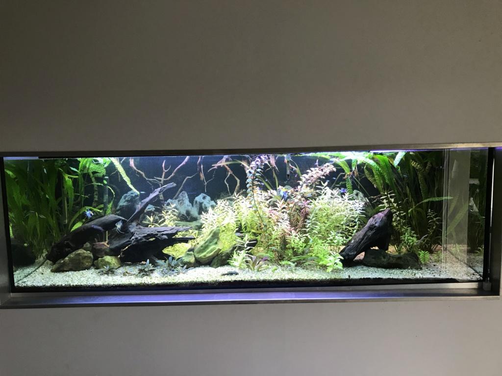 Mes aquariums  F7ac3410