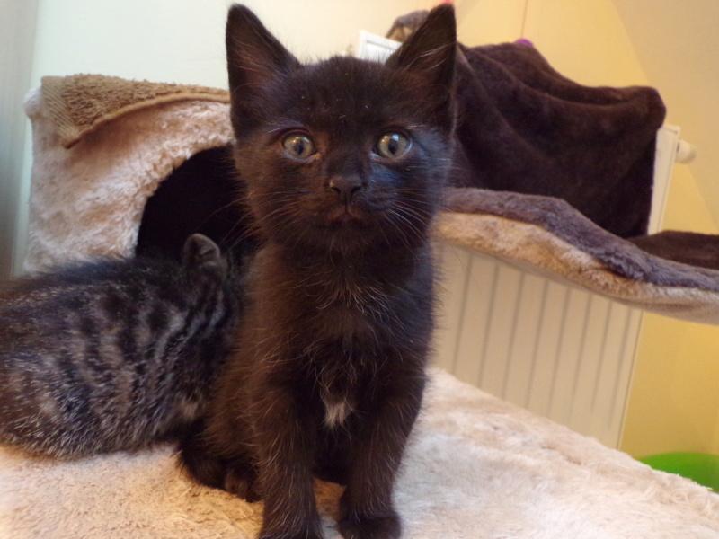 Obella, chatonne noire avec petite tache blanche, née le 01/05/2018 100_2818