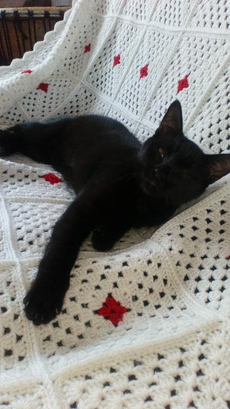 Obella, chatonne noire avec petite tache blanche, née le 01/05/2018 98411
