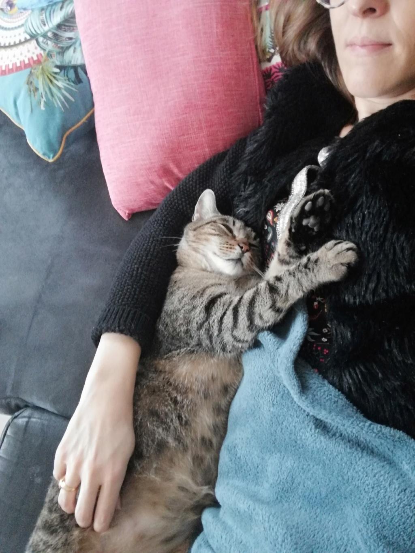 Léto, gentil chat mâle type européen, tigré, né en juin 2015 Leto_310