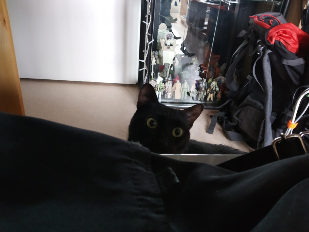 LYNN, chatte noire née en 2015 Lynn410