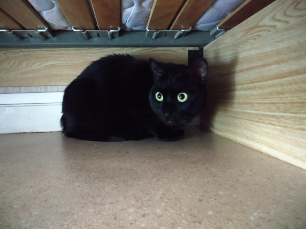 LYNN, chatte noire née en 2015 Lynn_110