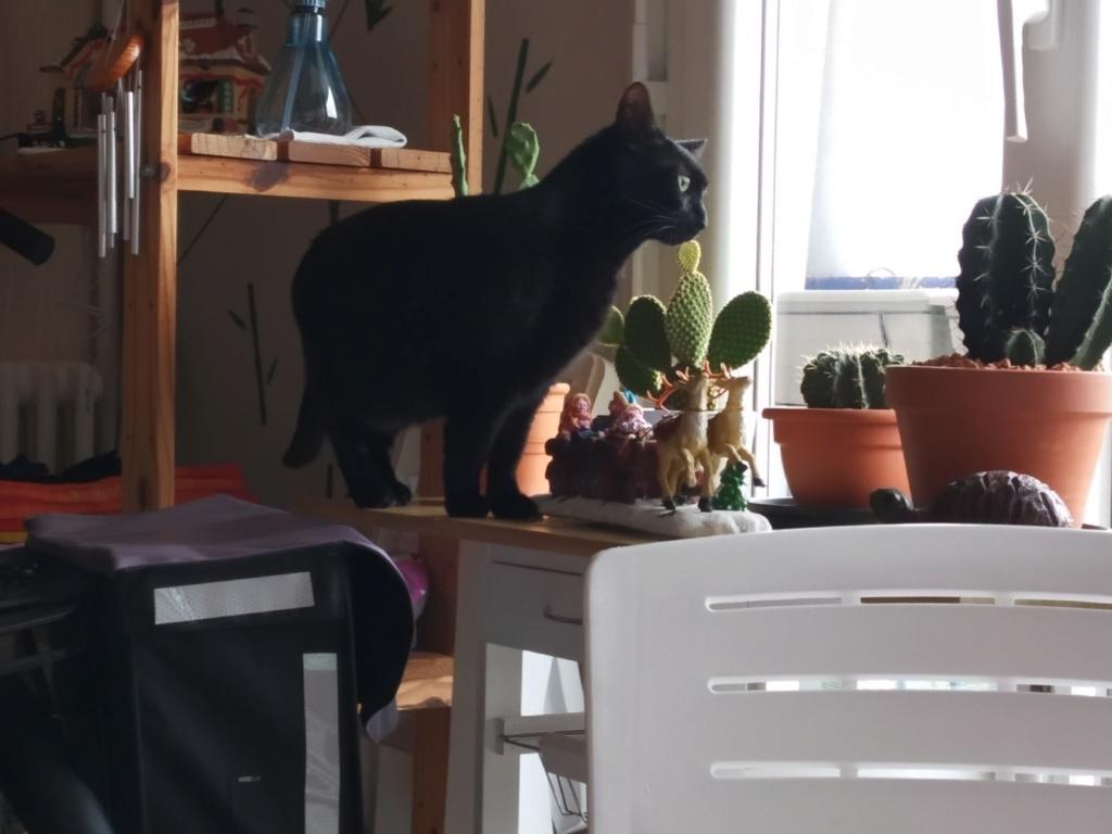 LYNN, chatte noire née en 2015 Lynn_311