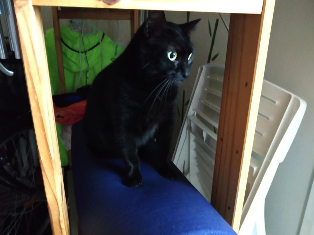 LYNN, chatte noire née en 2015 Lynn_510